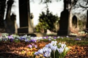 改葬の手続きとは?お墓を引っ越す場合の手順を解説